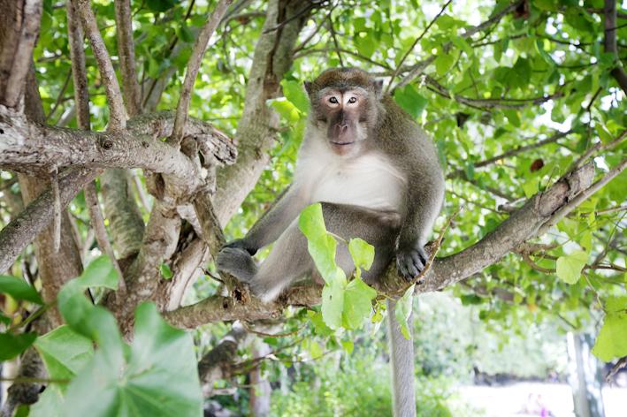 Fotograf Maria Hansson. Till Pralin. Thailand, Krabiprovinsen.